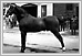 Horses R.T. Travers Stables 1914 N1677 04-206Lewis B. Foote Archives of Manitoba