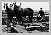 Match de labourage' plaines de Portage. 1903 08-207 Illustrated Souvenir of Winnipeg 1903 RBR FC 3396.37.M37 UofM Special Archives