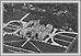 Vue aeriale de l'edifice legislatifs 09-269 Gary Becker Heritage Winnipeg